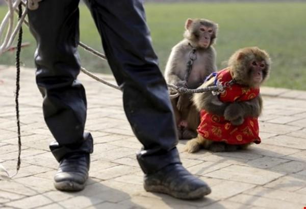 Đột nhập lò huấn luyện 'Tôn Ngộ Không' ở Trung Quốc ảnh 4