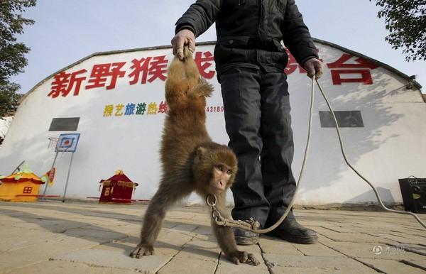 Đột nhập lò huấn luyện 'Tôn Ngộ Không' ở Trung Quốc ảnh 10