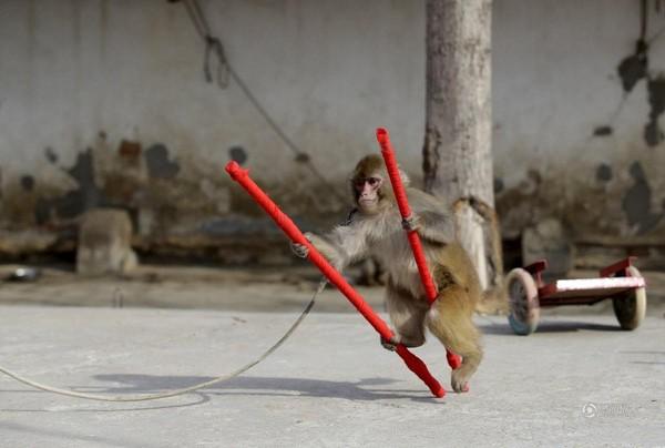 Đột nhập lò huấn luyện 'Tôn Ngộ Không' ở Trung Quốc ảnh 8