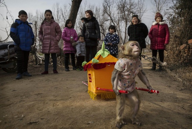Đột nhập lò huấn luyện 'Tôn Ngộ Không' ở Trung Quốc ảnh 5