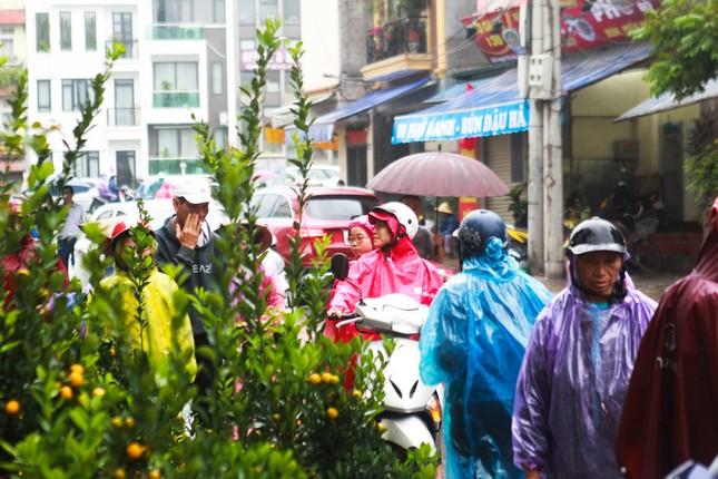 Đào quất phá giá chiều 30 Tết, người Hà Nội đội mưa đi mua ảnh 2