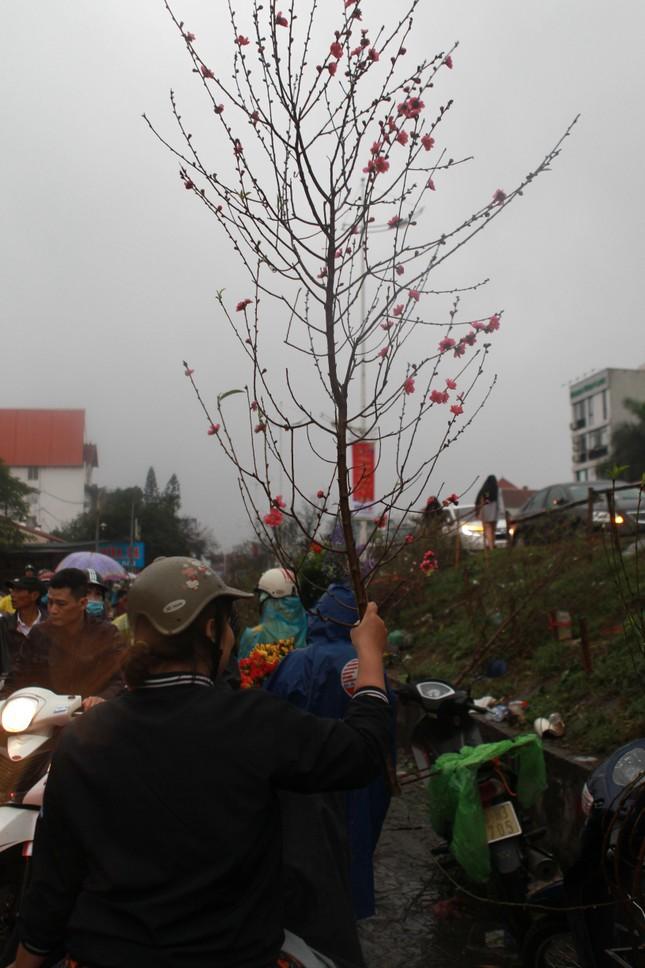 Đào quất phá giá chiều 30 Tết, người Hà Nội đội mưa đi mua ảnh 8