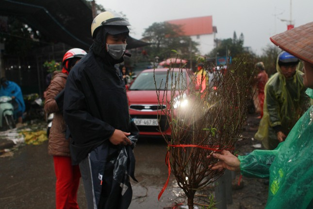 Đào quất phá giá chiều 30 Tết, người Hà Nội đội mưa đi mua ảnh 9