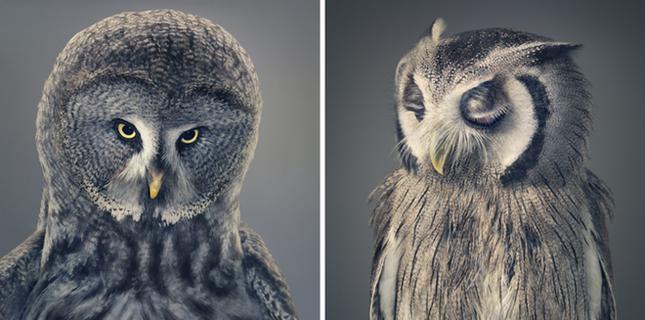 Những khoảnh khắc lạ lẫm, đáng kinh ngạc của các loài động vật ảnh 10