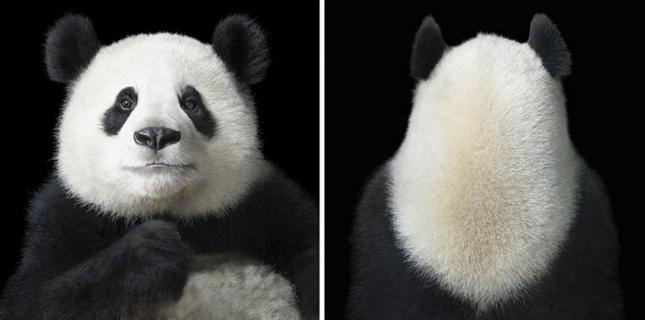 Những khoảnh khắc lạ lẫm, đáng kinh ngạc của các loài động vật ảnh 12