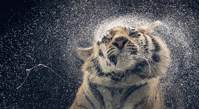 Những khoảnh khắc lạ lẫm, đáng kinh ngạc của các loài động vật ảnh 3