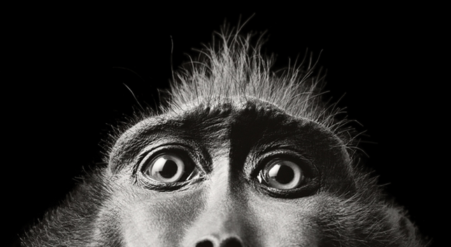 Những khoảnh khắc lạ lẫm, đáng kinh ngạc của các loài động vật ảnh 5