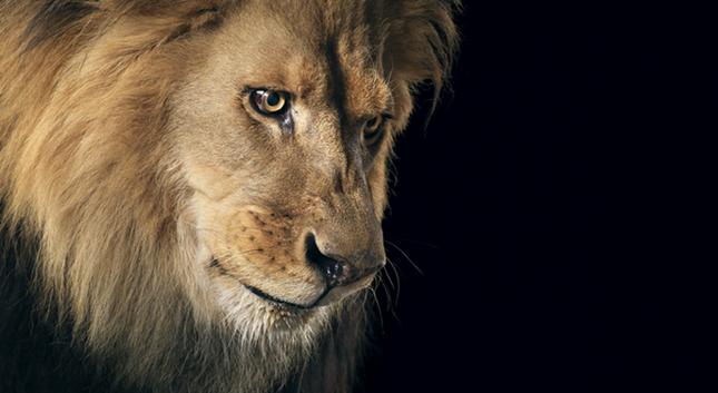 Những khoảnh khắc lạ lẫm, đáng kinh ngạc của các loài động vật ảnh 6