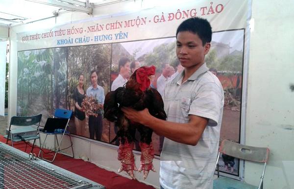 Cận cảnh gà Đông Tảo trả giá 30 triệu đồng không bán ảnh 1