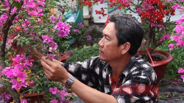 Ngắm vườn hoa giấy '6 trong 1' độc đáo ở miền Tây ảnh 1