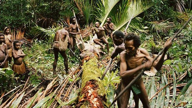 Bộ tộc nào ở Indonesia từng có tục săn đầu người và ăn thịt người ?