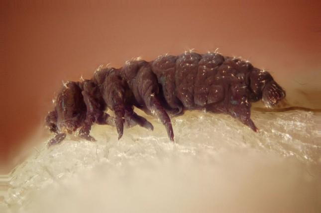 1001 thắc mắc: Sinh vật nào sống 'bất tử' trên Trái đất? ảnh 1