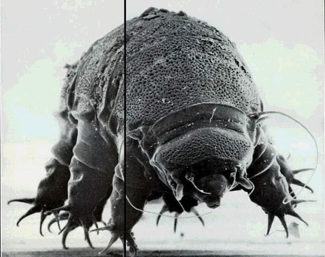 1001 thắc mắc: Sinh vật nào sống 'bất tử' trên Trái đất? ảnh 2