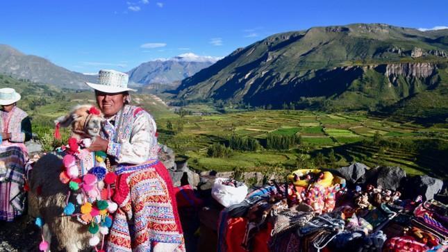 Nền quốc kỳ Peru gồm hai màu chủ đạo nào?
