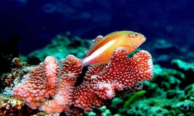 1001 thắc mắc: Loài cá nào chỉ mất 20 ngày để chuyển giới từ cái thành đực? ảnh 2