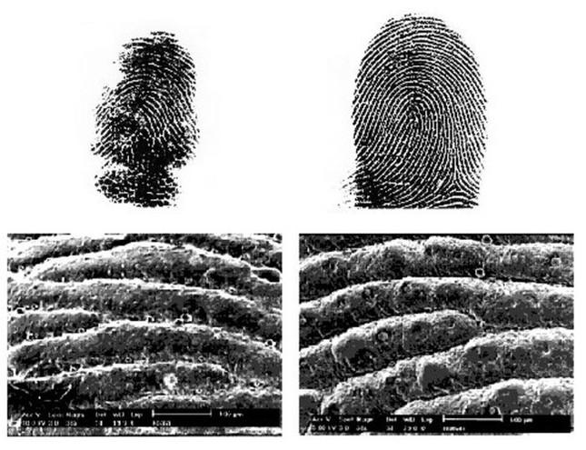 1001 thắc mắc: Loài vật nào cũng có dấu vân tay như con người? ảnh 1