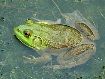1001 thắc mắc: Những loài vật nào có khả năng kháng độc tuyệt diệu? ảnh 2