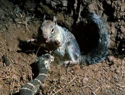1001 thắc mắc: Những loài vật nào có khả năng kháng độc tuyệt diệu? ảnh 1