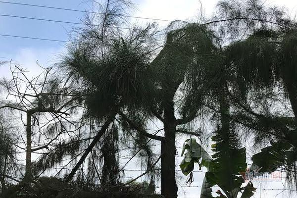 Nhận lệnh chặt cây trong giờ học, nam sinh lớp 9 Hải Dương bị điện giật tử vong ảnh 1