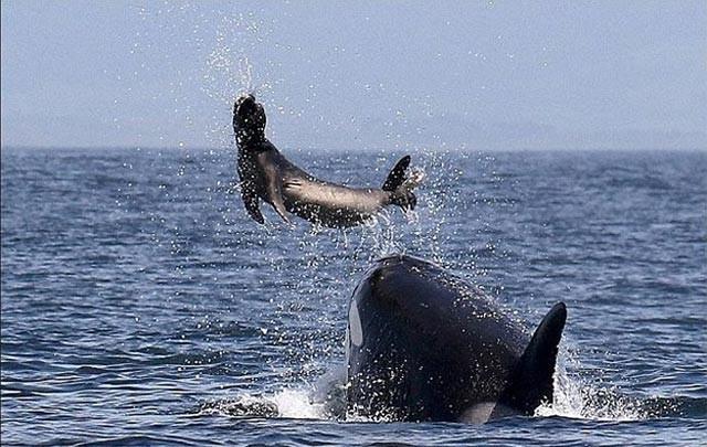 1001 thắc mắc: Những 'sát thủ' săn mồi nào đáng sợ trong thế giới động vật? ảnh 1