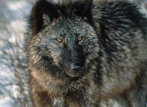 1001 thắc mắc: Những 'sát thủ' săn mồi nào đáng sợ trong thế giới động vật? ảnh 2