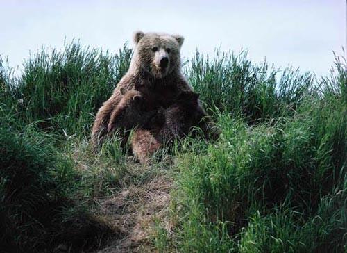 1001 thắc mắc: Những 'sát thủ' săn mồi nào đáng sợ trong thế giới động vật? ảnh 6