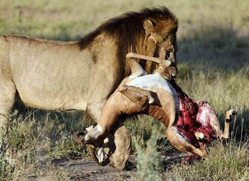 1001 thắc mắc: Những 'sát thủ' săn mồi nào đáng sợ trong thế giới động vật? ảnh 7