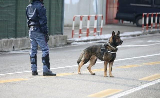 1001 thắc mắc: Điều gì giúp chó thính tai? ảnh 1