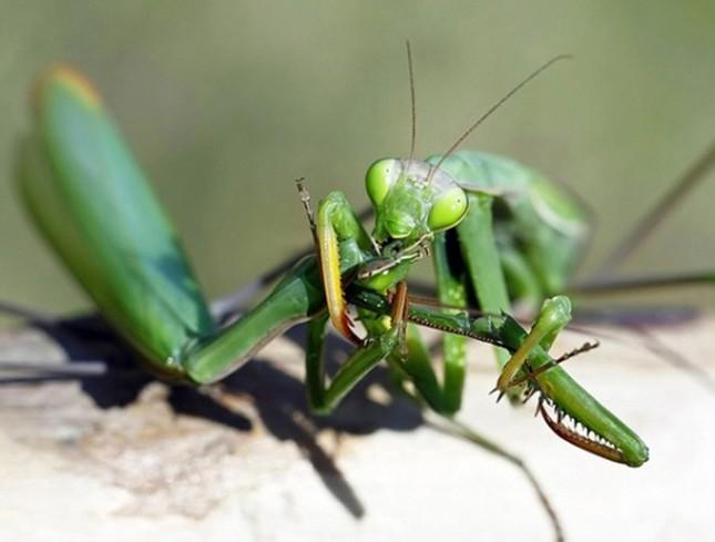 1001 thắc mắc: Loài vật nào tàn nhẫn nhất thế giới? ảnh 5
