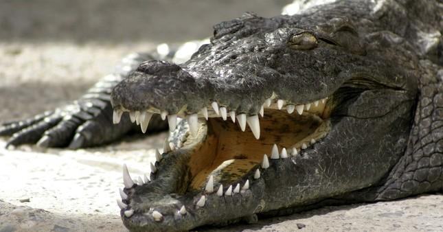 1001 thắc mắc: Loài vật nhỏ bé nào sát hại nhiều người nhất? ảnh 3