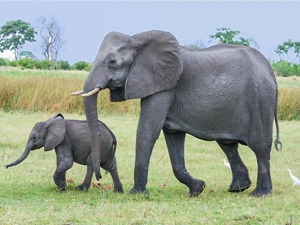 1001 thắc mắc: Loài vật nhỏ bé nào sát hại nhiều người nhất? ảnh 7