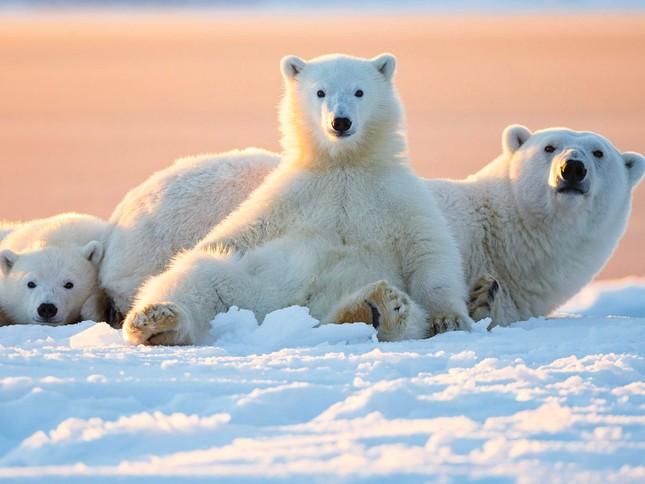 1001 thắc mắc: Loài vật nhỏ bé nào sát hại nhiều người nhất? ảnh 4