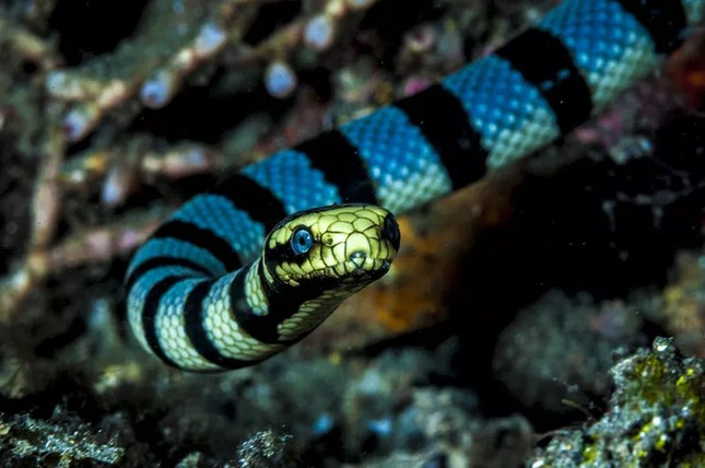 1001 thắc mắc: Loài vật nhỏ bé nào sát hại nhiều người nhất? ảnh 2