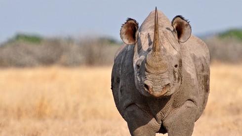 1001 thắc mắc: Những động vật nào rất dễ nổi cáu, nóng tính như... Trương Phi? ảnh 6