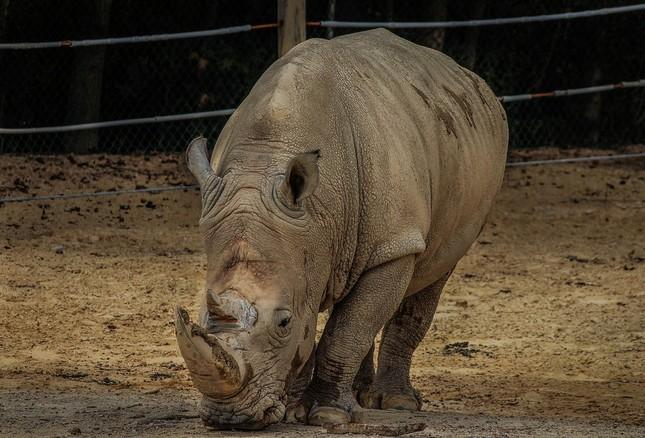 1001 thắc mắc: Những động vật nào siêu to khổng lồ nhất thế giới? ảnh 2