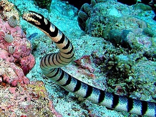 1001 thắc mắc: Vì sao rắn độc bị chặt đứt đầu vẫn có thể cắn người? ảnh 1