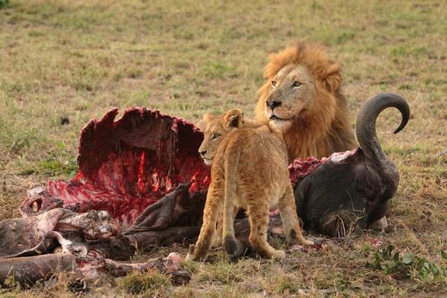 1001 thắc mắc: Những động vật nào là 'sát thủ' khát máu bậc nhất hành tinh? ảnh 4