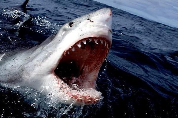 1001 thắc mắc: Những động vật nào là 'sát thủ' khát máu bậc nhất hành tinh? ảnh 1