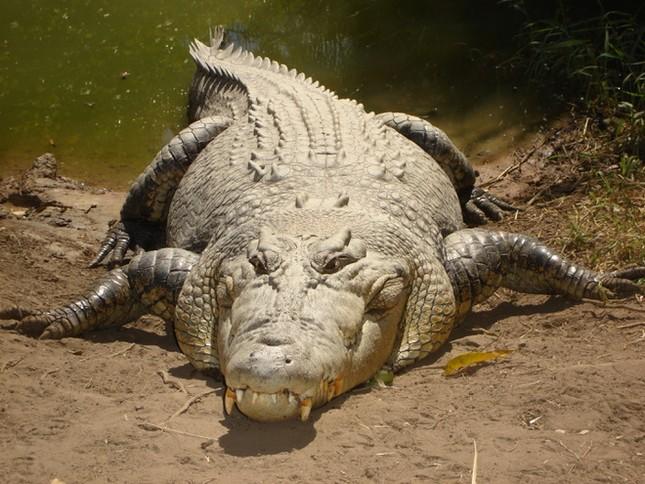 1001 thắc mắc: Những động vật nào là 'sát thủ' khát máu bậc nhất hành tinh? ảnh 3