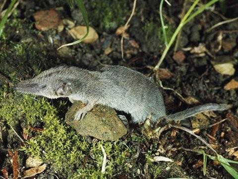 1001 thắc mắc: Loài động vật nào có xương sống nhỏ nhất thế giới? ảnh 3
