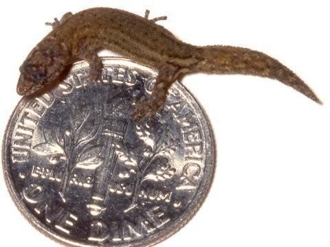 1001 thắc mắc: Loài động vật nào có xương sống nhỏ nhất thế giới? ảnh 4