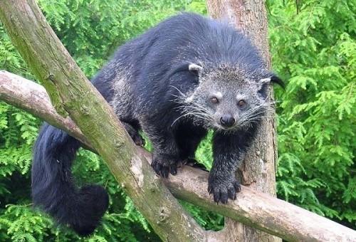 1001 thắc mắc: Những loài động vật nào tỏa mùi thơm đặc biệt? ảnh 3