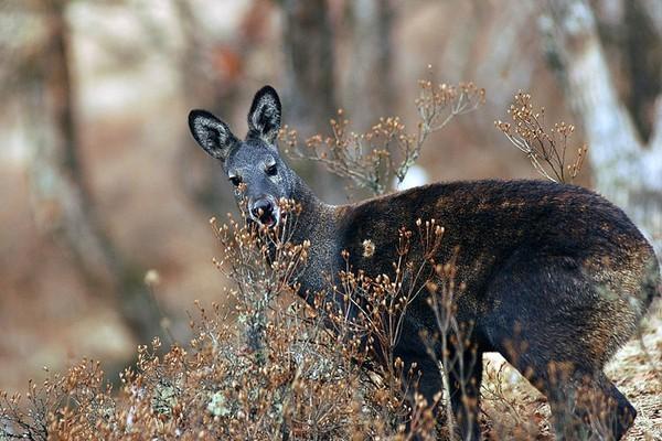 1001 thắc mắc: Những loài động vật nào tỏa mùi thơm đặc biệt? ảnh 1