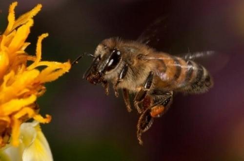 1001 thắc mắc: Những loài động vật nào tỏa mùi thơm đặc biệt? ảnh 6