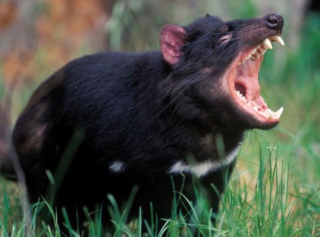 Những loài động vật nào có những khả năng đặc biệt khiến con người thèm muốn? ảnh 2