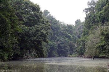 Sông Congo chảy qua đường xích đạo, đúng hay sai?