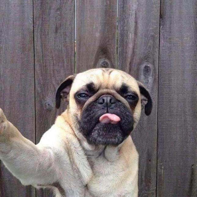 Ở thành phố nào của Mỹ cấm làm mặt xấu với chó?