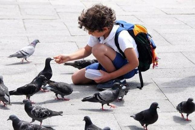 Thành phố nào ở Italy cấm cho chim bồ câu ăn?