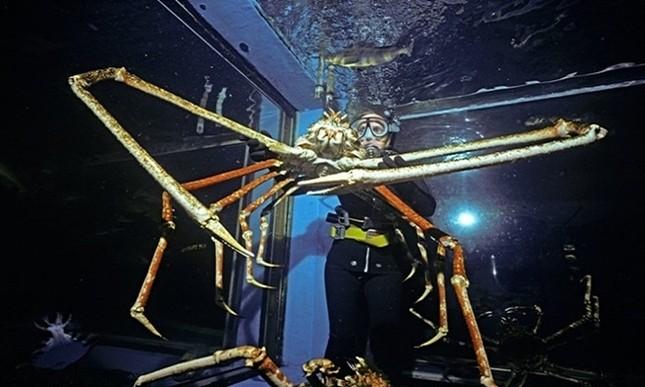 Những động vật nào 'khủng' nhất dưới đại dương? ảnh 1