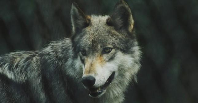 1001 thắc mắc: Loài động vật nào có thể nhịn ăn tới 30 năm? ảnh 4